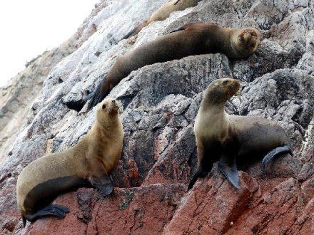Ballestas Inseln mit Green Peru Adventures
